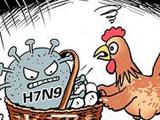 谣传吃大盘鸡感染H7N9 疾控中心:100℃加热可杀毒