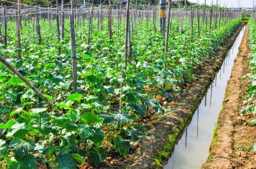 今年合肥市蔬菜瓜果计划种植面积194万亩