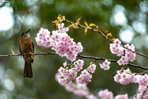 春暖花开 安徽多个A级景区将陆续开放