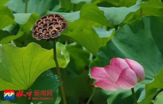 """""""瀼溪环曲""""景观(钱续坤/摄)"""