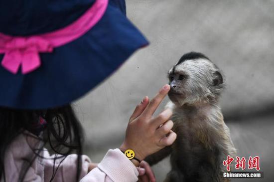 资料图:3月21日,一名儿童隔着玻璃与一只幼猴互动。当日,云南野生动物园正式恢复开放。中新社记者 康平 摄
