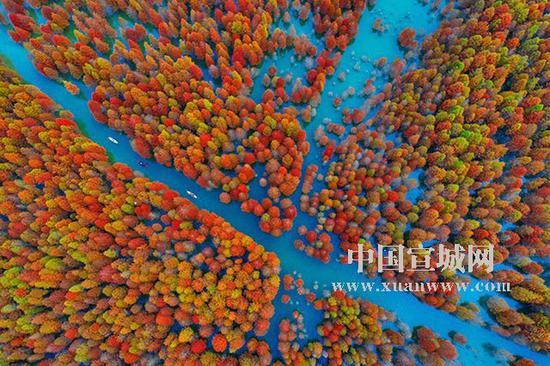 红杉林俯瞰。