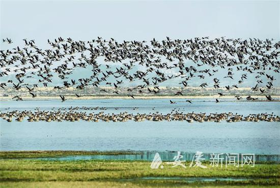 """绘就华阳河湖群""""人水和谐""""美丽画卷"""