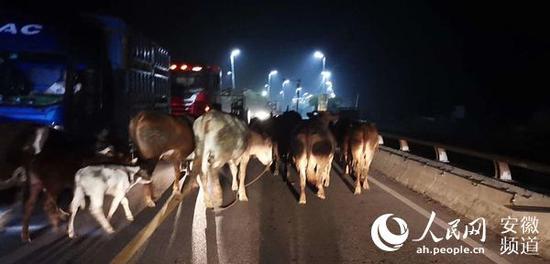 20日凌晨,阜南蒙洼蓄洪区内居民开始撤离。张洪金摄