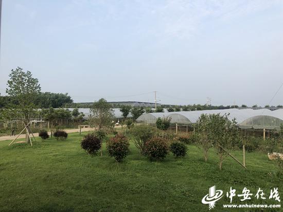 望江县龙泉乡现代农业园
