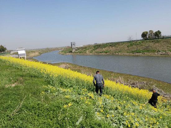 发动群众自清迎水坡农作物