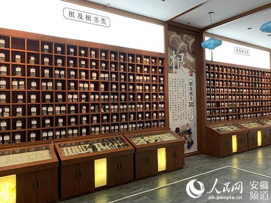 位于市场4楼的中药材标本室,内有各类中药材标本1000余种。陈浩摄