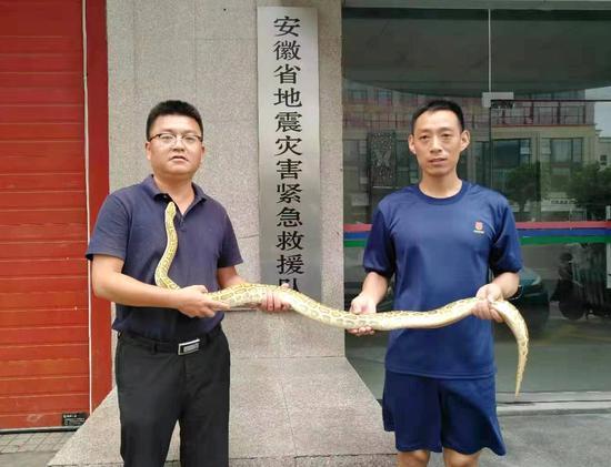 抓获黄金大蟒蛇