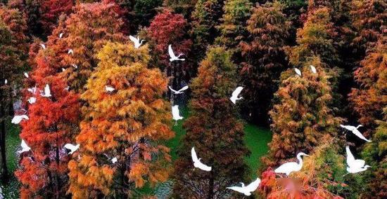 大汉塘周边优良的生态环境吸引了众多鸟儿来此栖息繁衍。(来源:人民网)