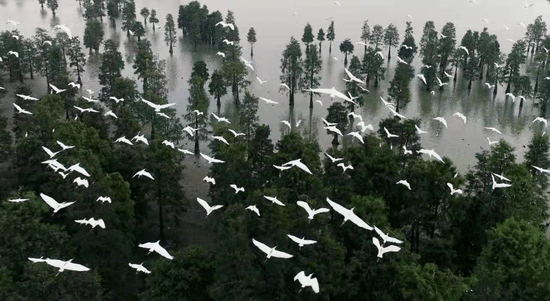 大汉塘周边优良的生态环境吸引了众多鸟儿来此栖息繁衍。张大岗摄
