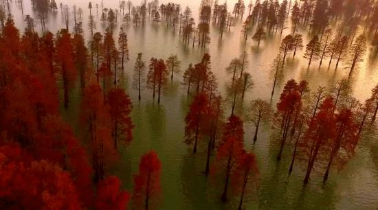 水上森林。(来源:人民网)