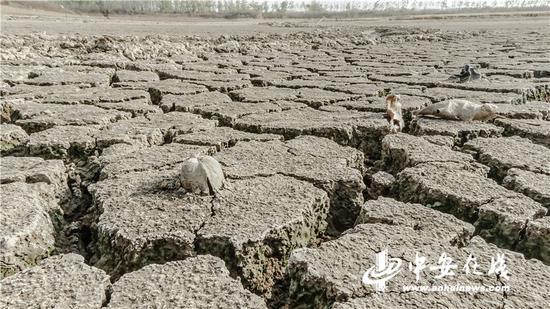 赵店村一口池塘已经干涸,露出一块贝壳
