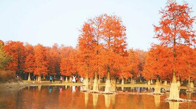 近日,游客在大汉塘赏景休闲。(赵德斌摄)