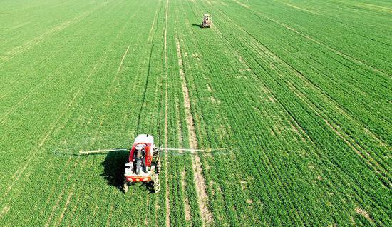 植保人员驾驶自走式高杆喷雾机对小麦进行管护作业。刘勤利 摄