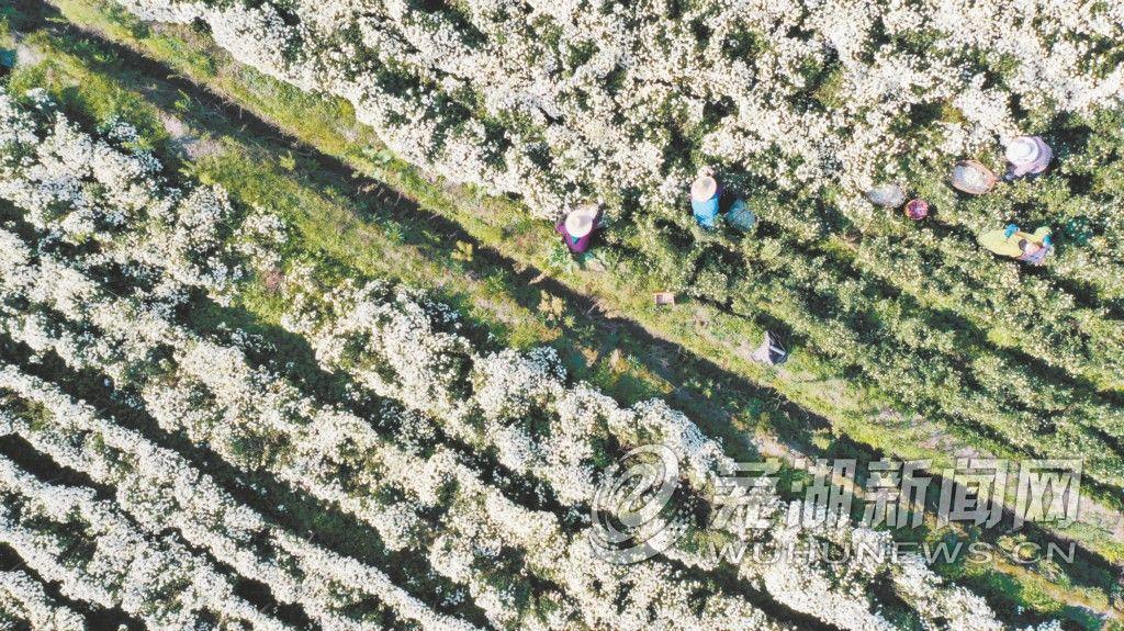 采菊浮山下