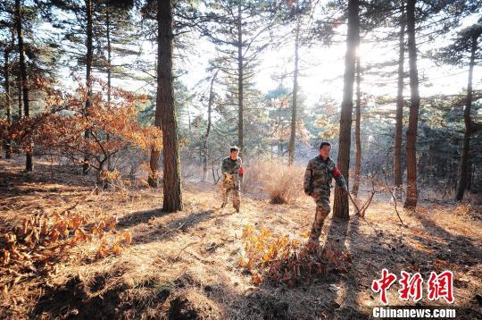 和小弘的日常工作就是巡山、护林,每天早晚两次,每次需要三四个小时。 刘峰 摄