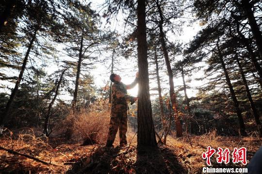 和小弘说,对这里的一草一木,特别是他自己种的树,从小看着长大,就像自己的孩子,有感情了。 刘峰 摄