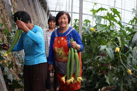 泗县:乡村产业谱出发展新篇章