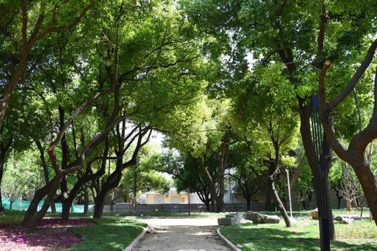 合肥城区下月将有一座新公园开放 适合怀旧