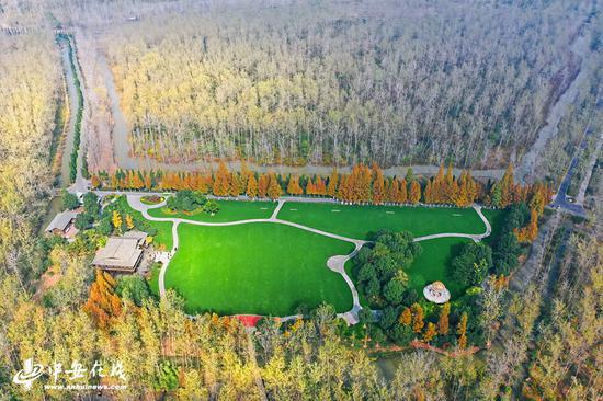 金秋时节的合肥滨湖国家森林公园秋色旖旎,层林尽染