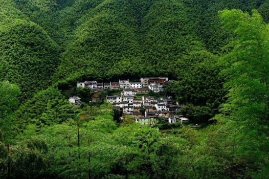 黟县木坑竹海景区一望无际的竹海