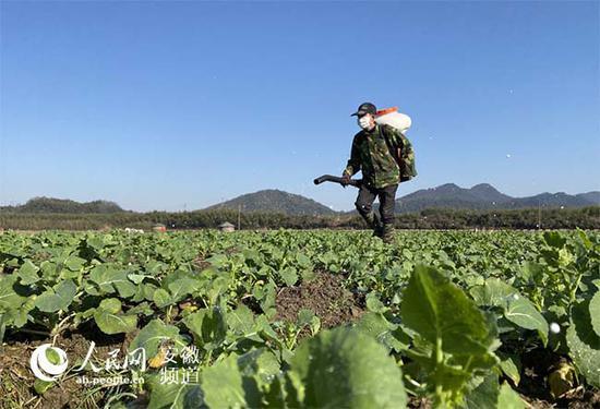 64岁的王大庆背着喷肥机给油菜施肥。顾维林摄