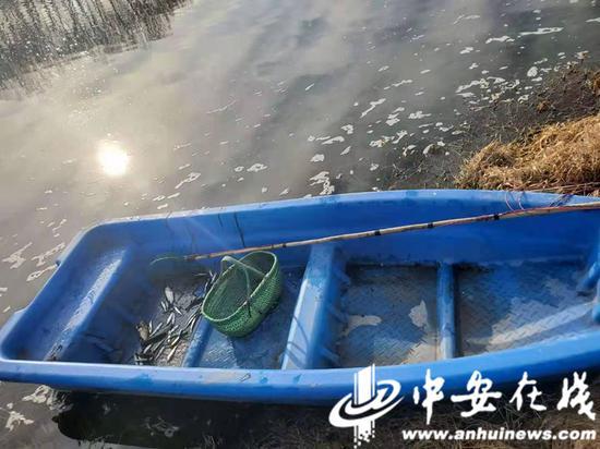 鱼获20余条(鲤鱼、小河鱼)