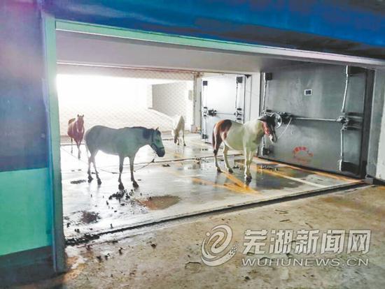 芜湖柏庄时代广场地下车库竟有人养马