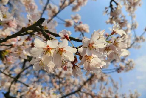 诗意宣城 春天的溪口 来了就不想走