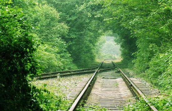 """合肥最美""""爱情隧道"""" 风景。"""