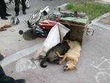 淮南一对父子驾车毒杀八只狗 给怀孕媳妇补营养