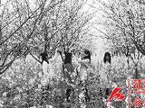 大蜀山往西十里花海 蜀西慢城观花节持续至4月23日