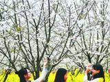 蜀西慢城首届观花节盛大启幕 市民可来此赏花摘果