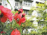 蚌埠48个老旧小区完成整治改造