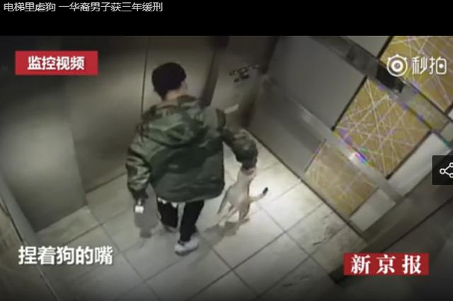 电梯里虐狗 一华裔男子获三年缓刑