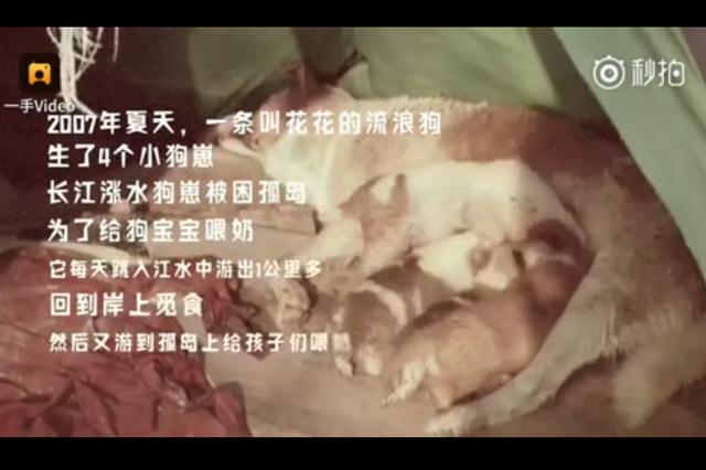 四只幼崽被困孤岛 流浪狗妈妈每天渡江去喂奶