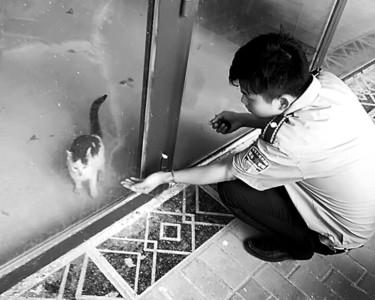 城管在逗弄小猫