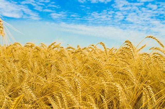 阜阳市收获秋粮超570万亩