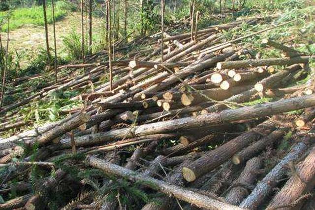 滥伐树木217棵 69岁老汉被判刑