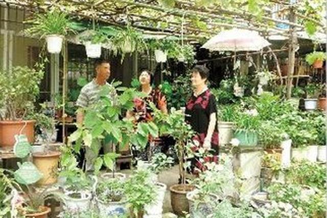 """阜阳一老人家里有小型""""植物园"""" 种了天南海北的树"""