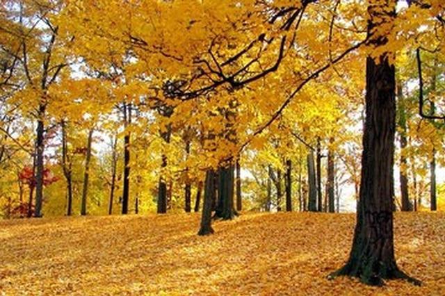 美哭了 合肥秋季最美的风景都在这里了