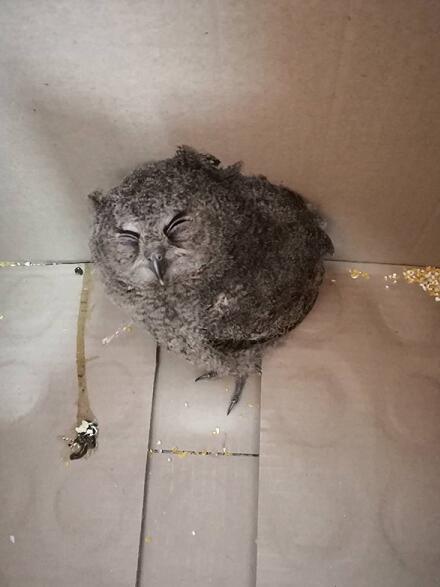 """飞不高的""""小小鸟""""获救 还在合肥安了家"""