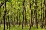 安徽将试点公益林政府租赁或赎买