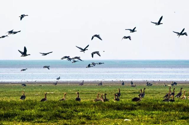 """安徽推行""""水质对赌""""生态补偿 滁州水质恶化赔600万"""