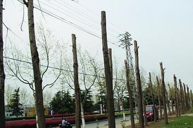 芜湖业主质疑树木修剪用力过猛 物业暂停修剪