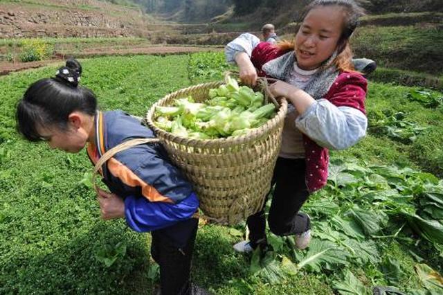 安徽有7.7万个家庭农场 数量位居全国第一