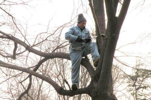 """业主质疑修剪大树""""用力过猛"""" 物业暂停修剪有些委屈"""