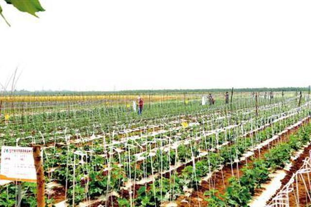 皖新育瓜菜新品种100多个 推广逾2000万亩创效百亿元