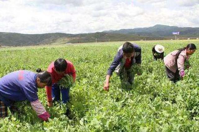安徽去年农村居民人均可支配收入12758元 居全国16位
