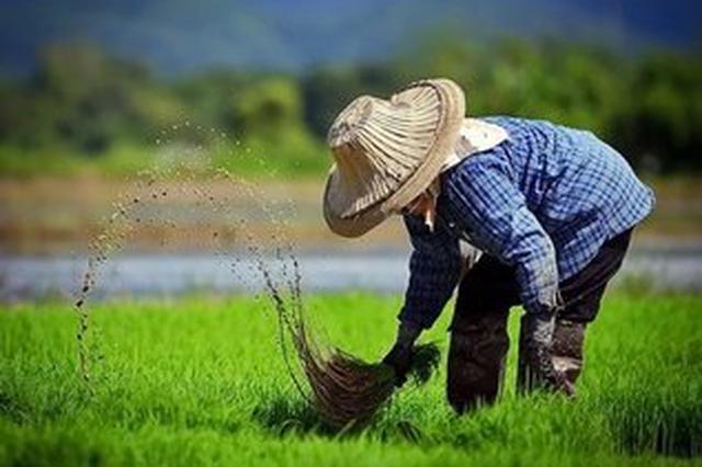 安徽省农民收入今年可望增长8.5%以上